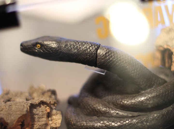 Coolhunts: Black Mamba by Kobe Bryant & Nike